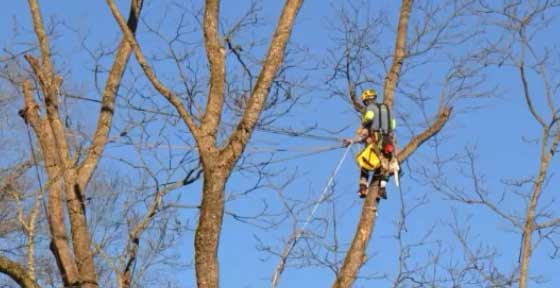 Athens GA tree service