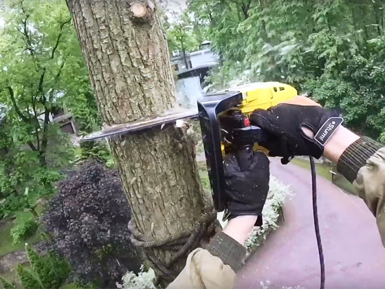 tree removal Gainesville GA